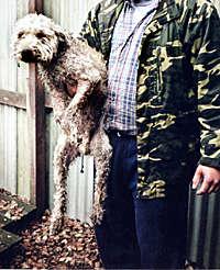 """Förra hösten slog polisen till mot en illegal uppfödare av pitbullterrier i  Västsverige. """"Han tillhandahöll även ett levande byte för dem som ville  träna ... ffbd643d08ad5"""